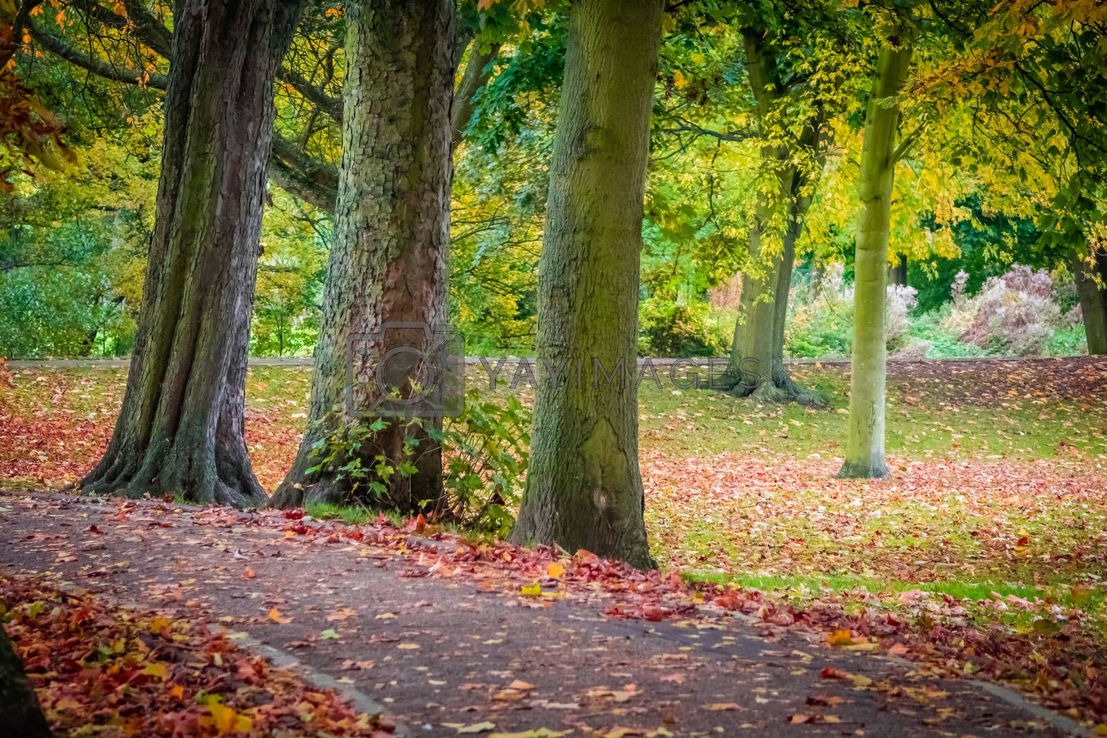 Colorful pathway in a public park in Colchester in autumn