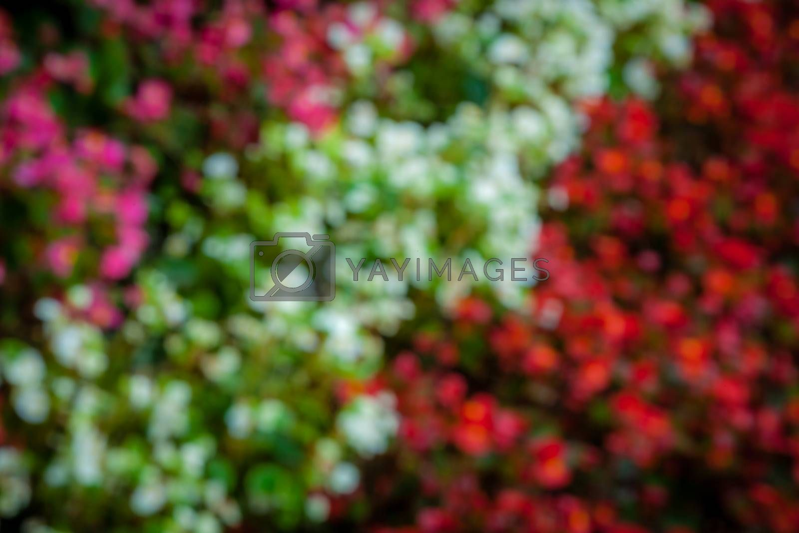 Abstract photo of multicoloured flowers on the ground in the park in spring