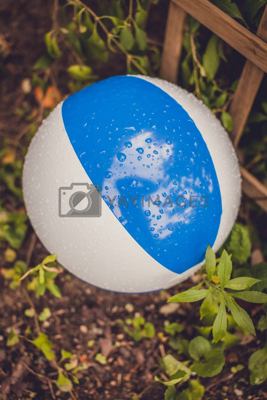Big colorful inflatable ball wet after rain on the ground in the garden