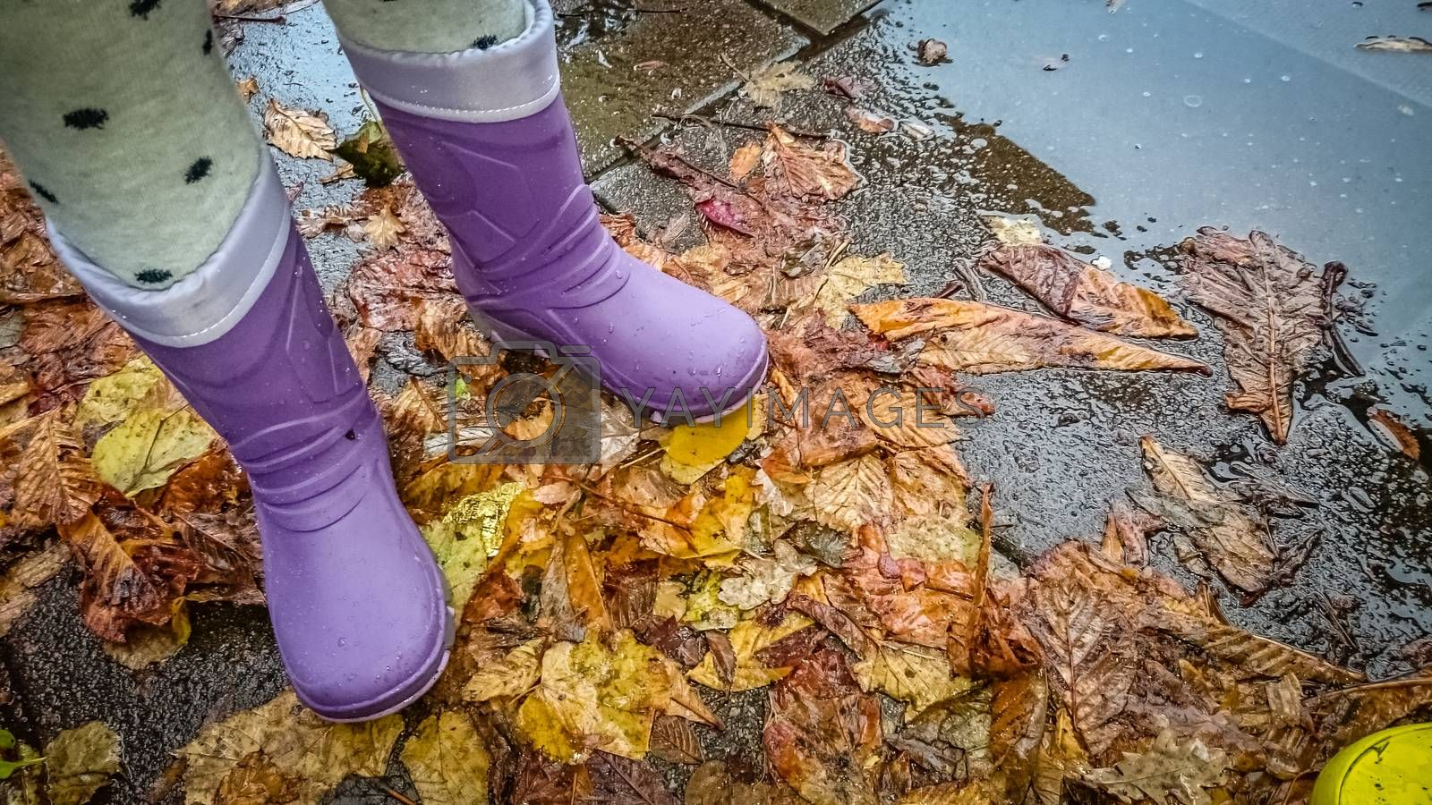 Little girl in her purple wellingtones standing on the old autumn fallen leaves in the street after the rain