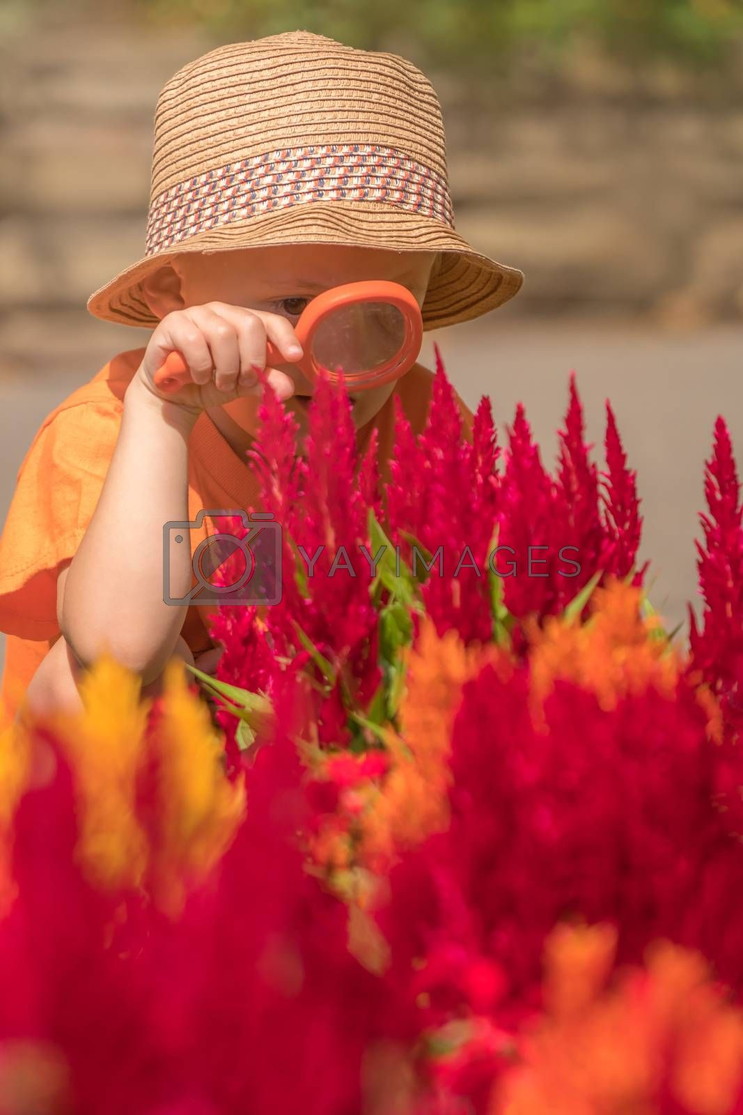 Photo of cute little happy Caucasian boy with a straw hat holding magnifying glass while looking for small insects among the blooming colorful flowers in the garden.