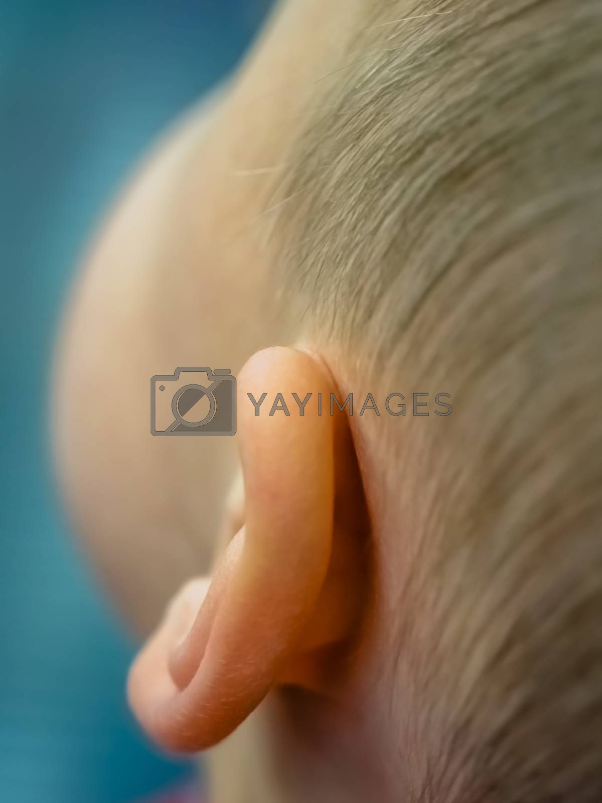 Closeup of an ear of a little Caucasian boy