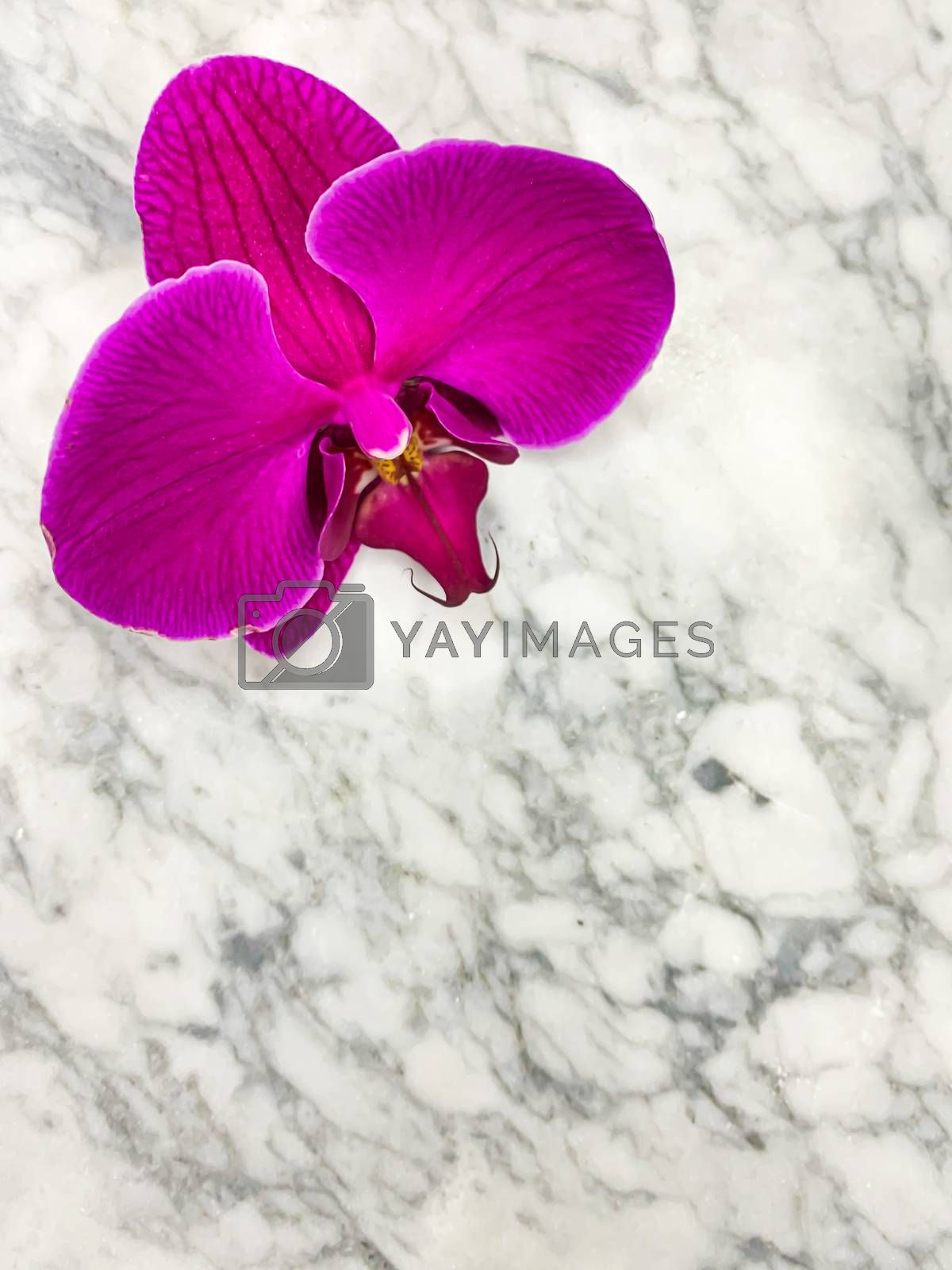 Purple Phalaenopsis orchid on a gray marble background. Vertical wallpaper postcard with empty space for text