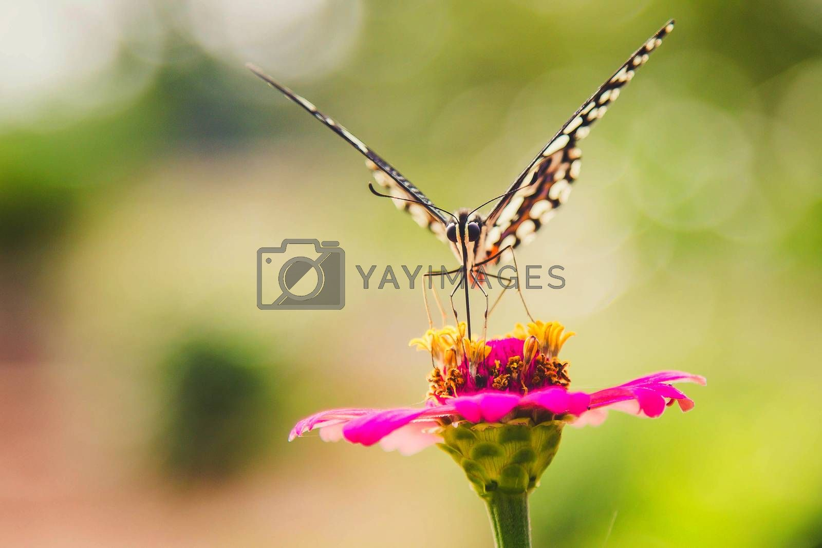Butterflies keep the nectar from flowers in the beautiful colorf by numberone9018