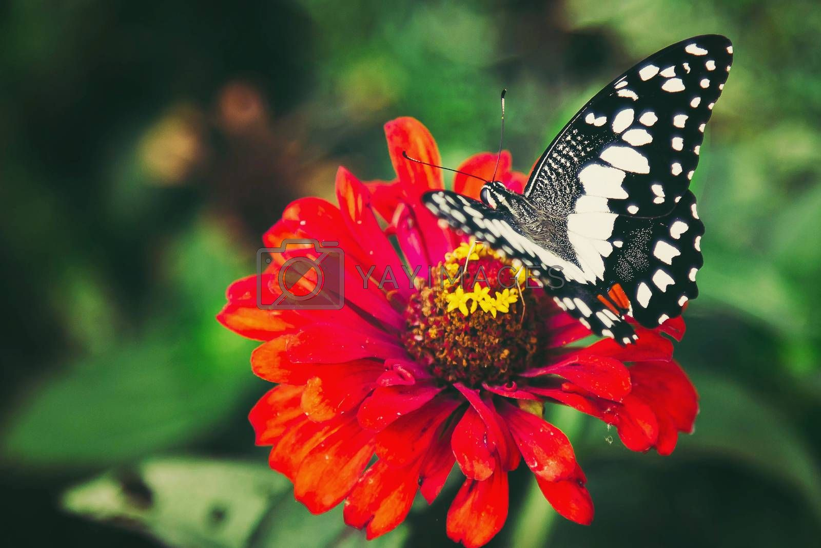 Butterflies keep the nectar from flowers in the beautiful colorful garden.