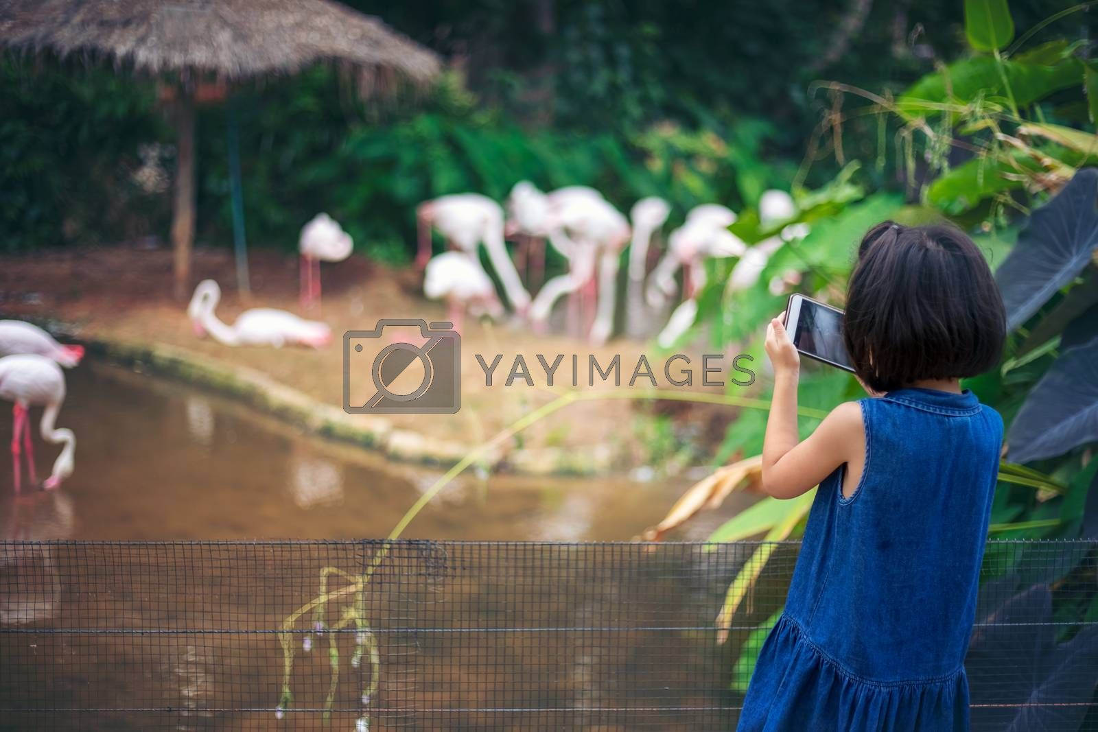 Asian kids girls are traveling and learning in the zoo with pleasure and fun.
