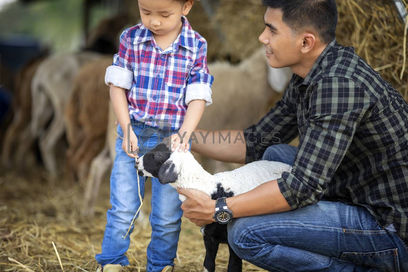 The father and son, the sheep farm owner, hug a small lamb in the embrace with love in their pet.
