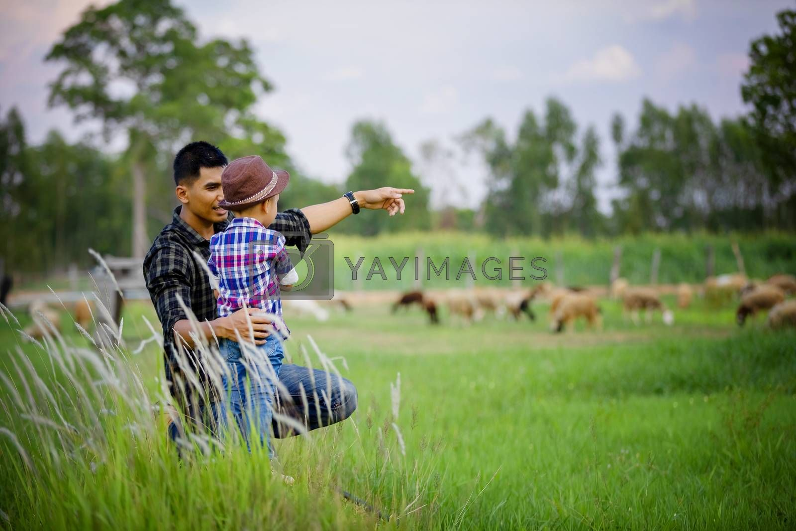 Father and son sat looking at the sheep on their farm and pointing their hands toward the sheep happily.