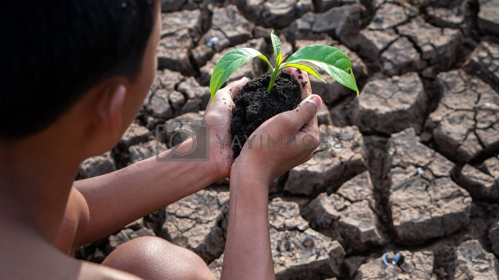 Hands holding a tree growing on cracked ground. global warming theme human hands defending green grass sprout rising from rainless cracked ground. Concept save the world