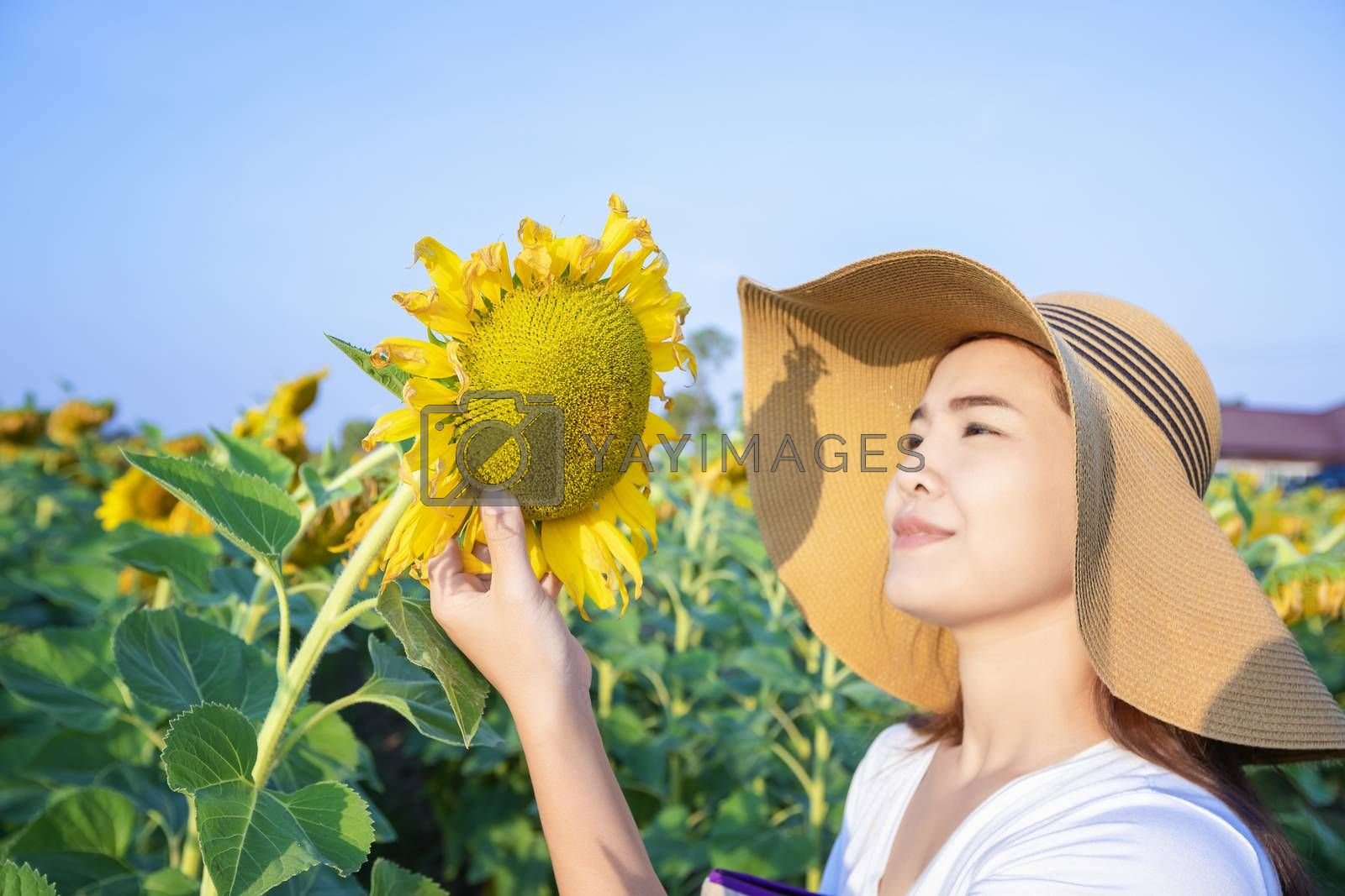 Beautiful woman in a beautiful blooming sunflower field. Happy w by numberone9018