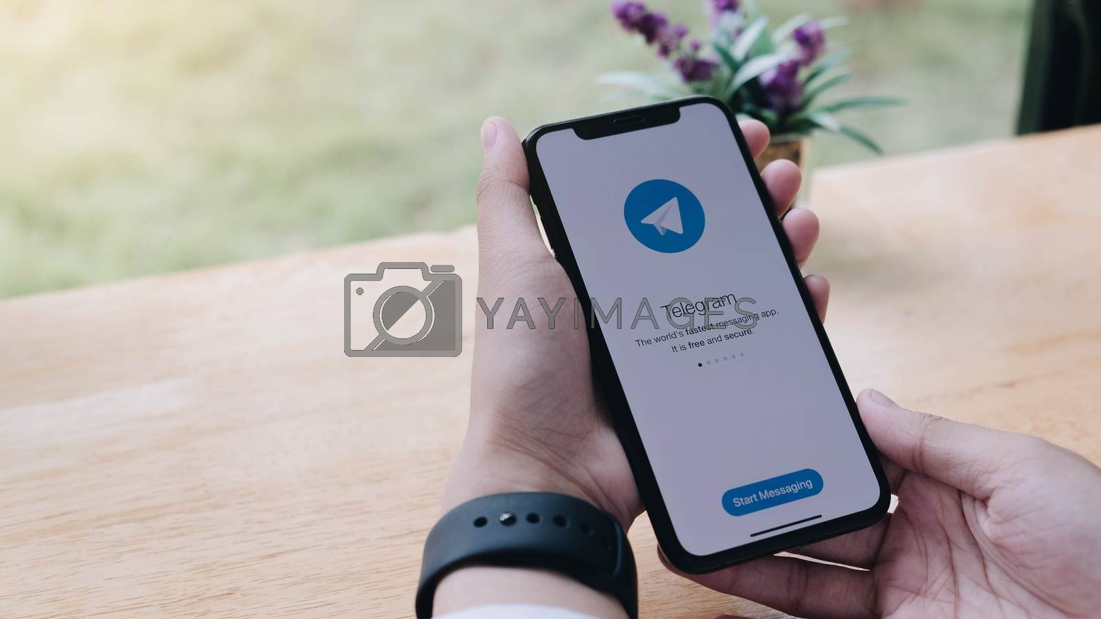 CHIANG MAI, THAILAND JUN 7 2020 : Telegram application icon on Apple iPhone Xs screen close-up. Telegram app icon. Telegram is an online social media network. Social media app