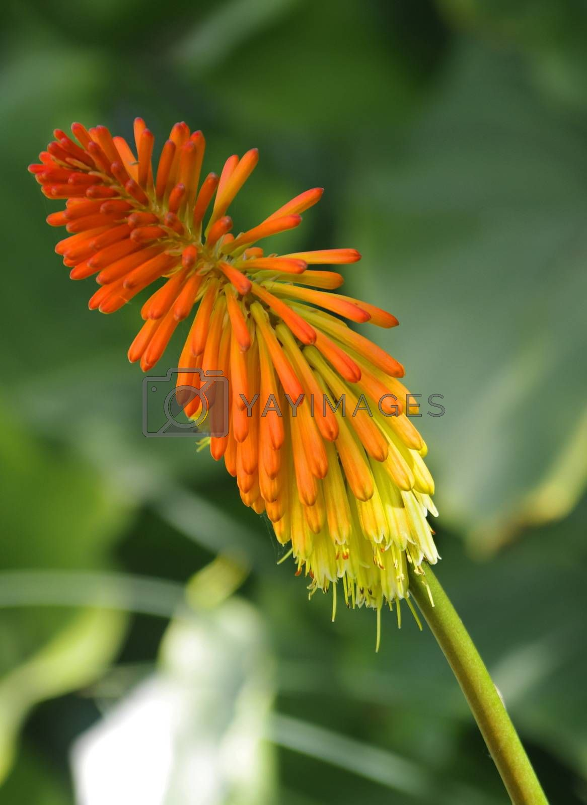 beautiful colorful spring plant