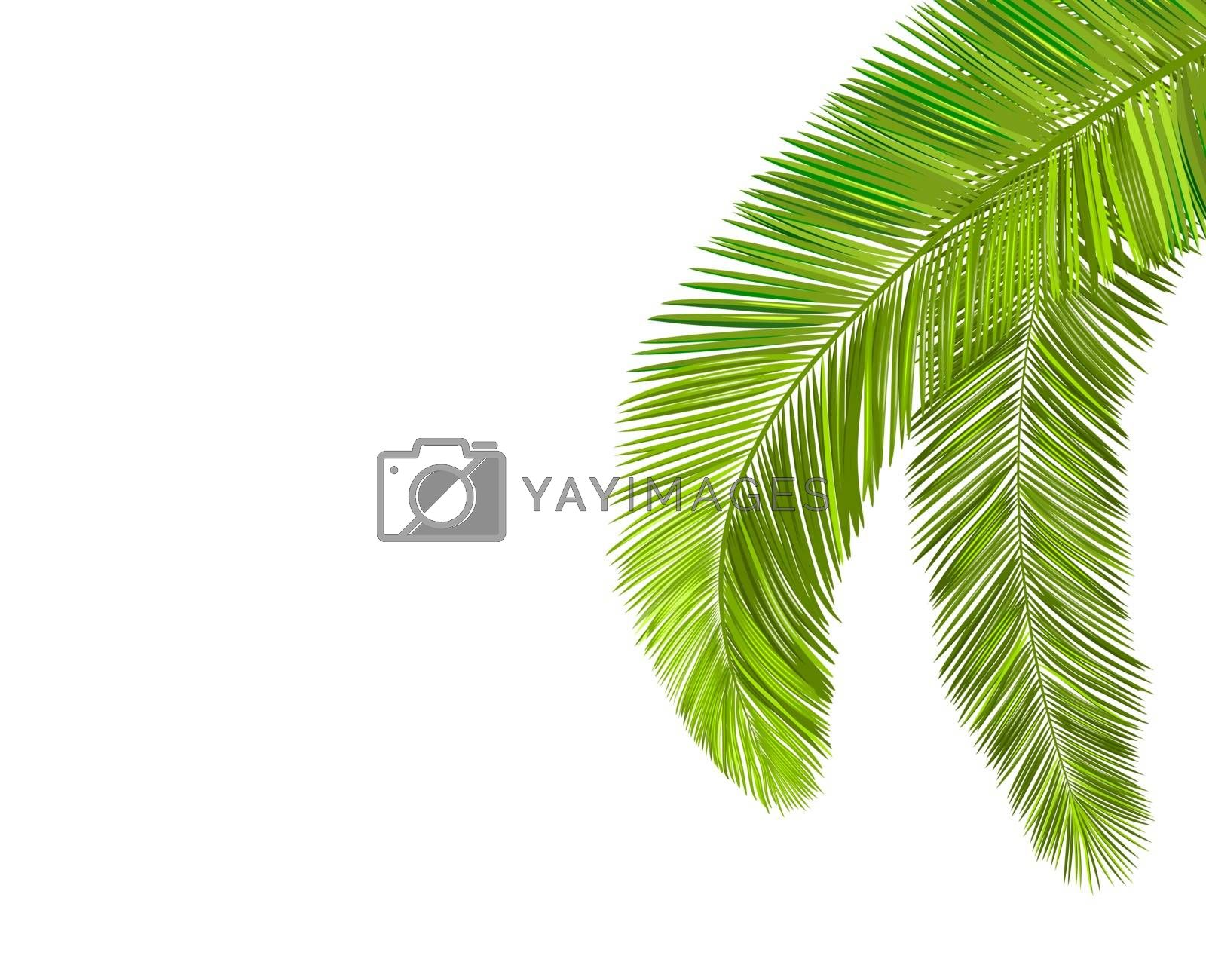 Palm tree leaf branch by liolle