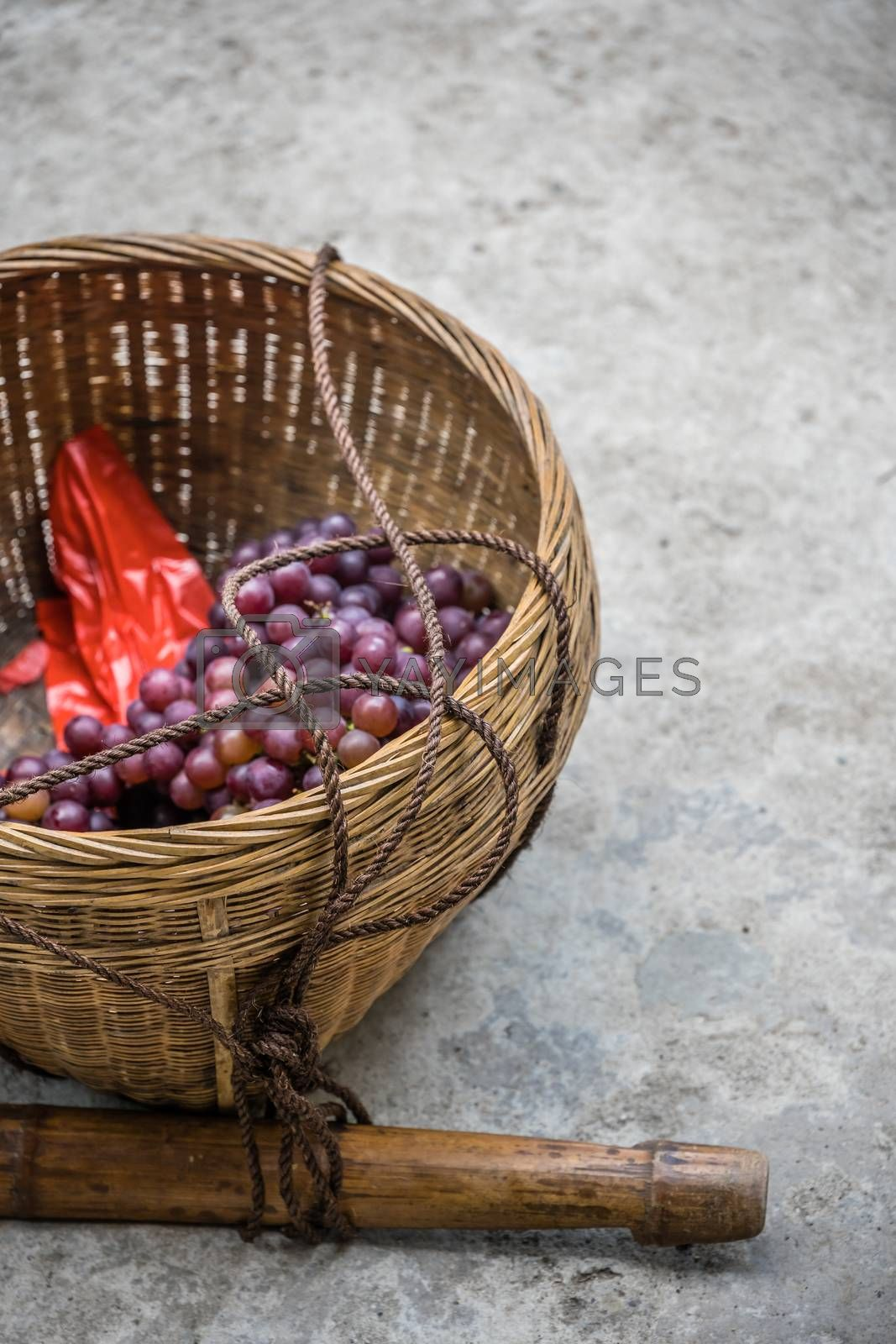 Royalty free image of Vertical shot of fresh grapes in a basket on the ground by pawopa3336