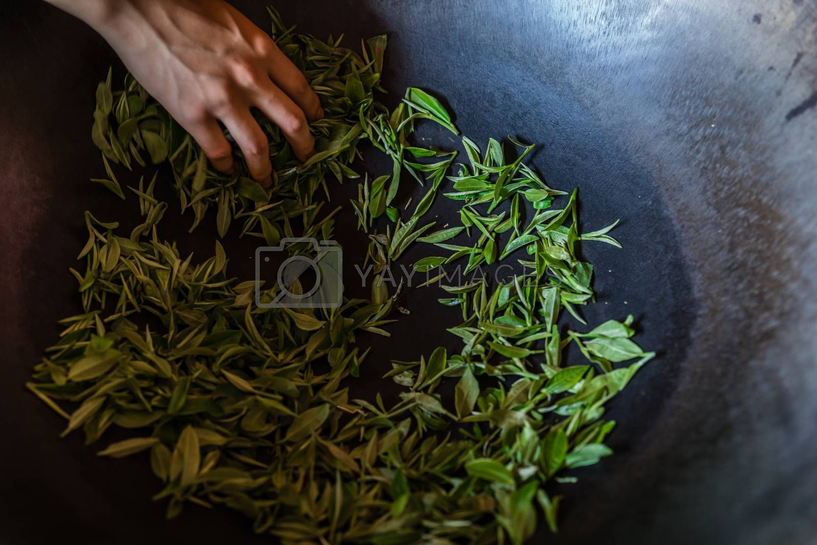 Processing tea leaves in a hot wok by pawopa3336