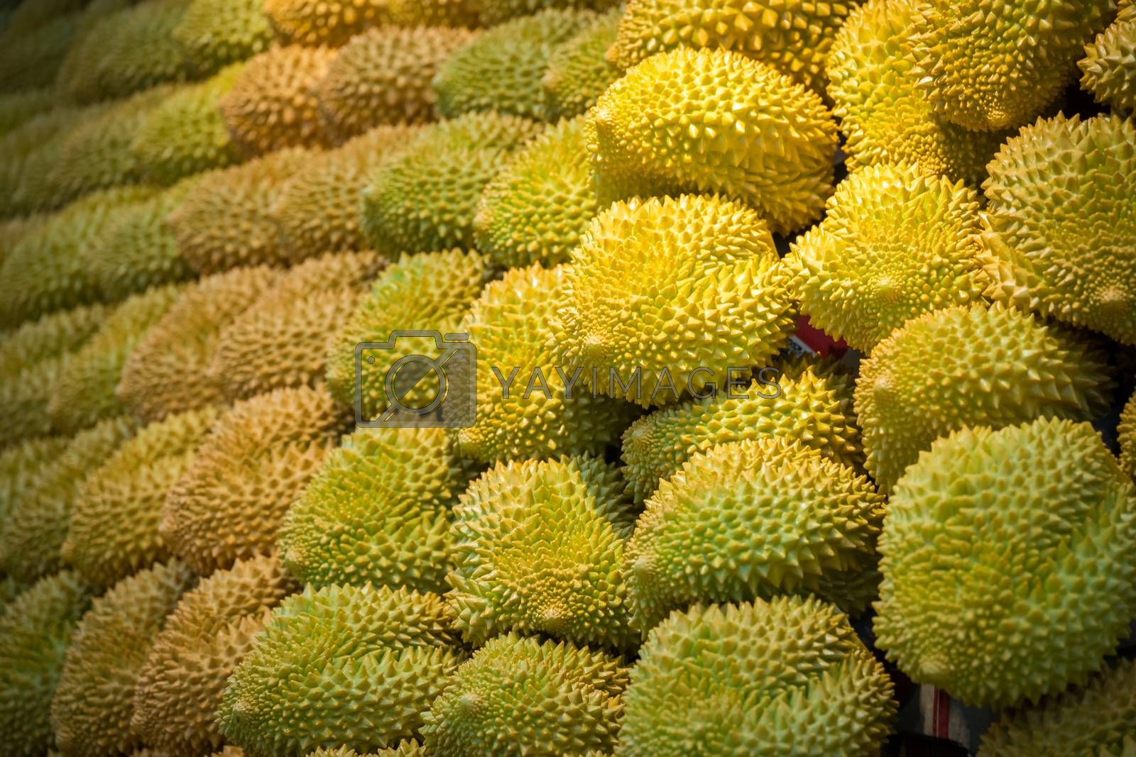 Closeup shot of a lot of fresh durian fruits in the market by pawopa3336
