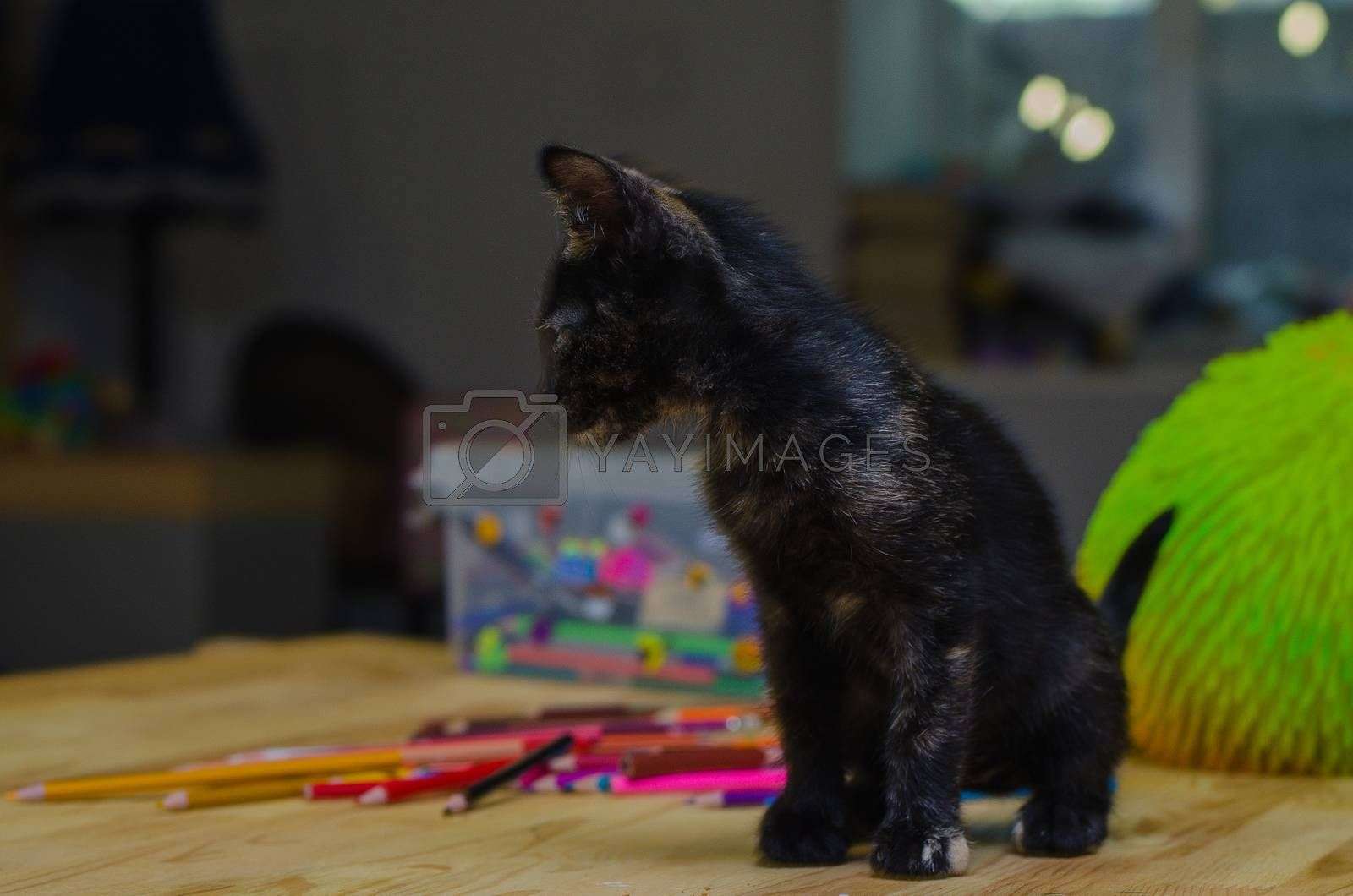 black kitty sit near the colored pencils