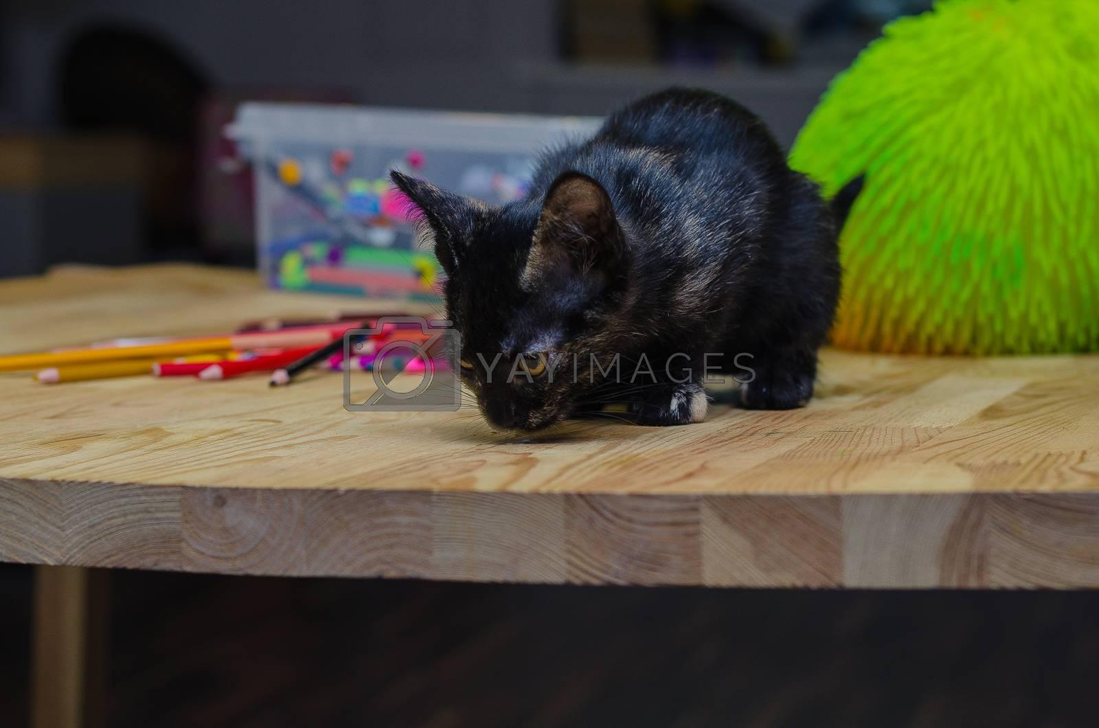 little black kitten sitting near multicolored pencils