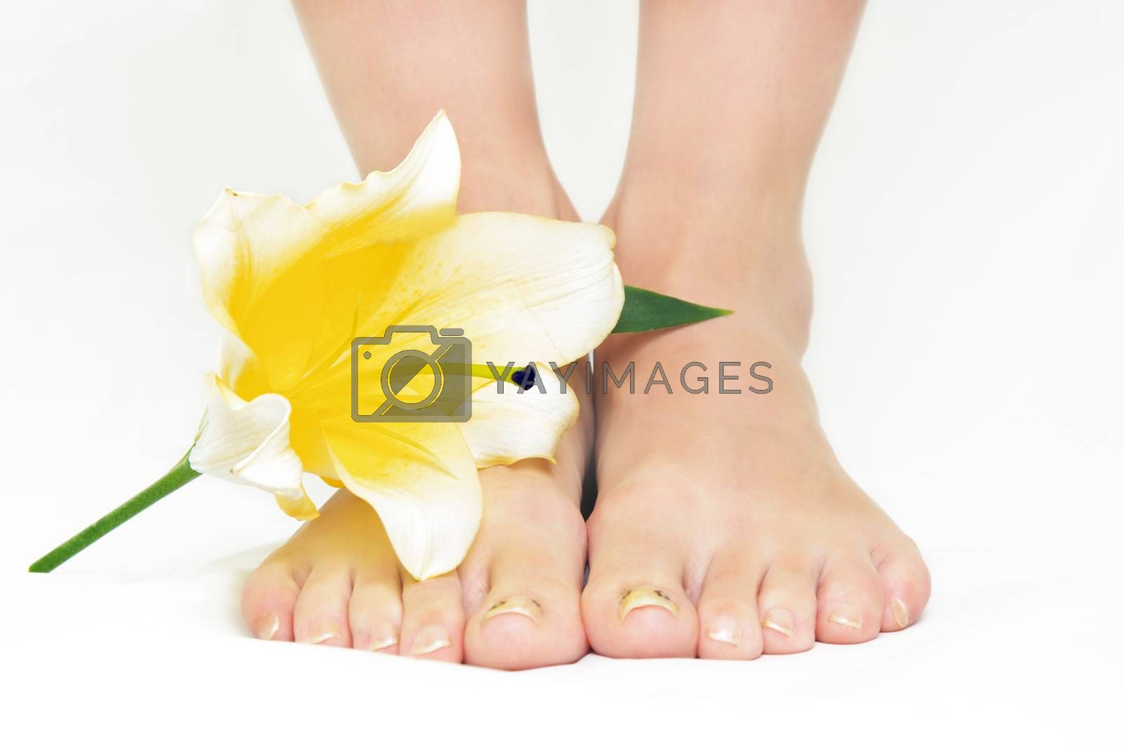 female legs with yellow lily flower
