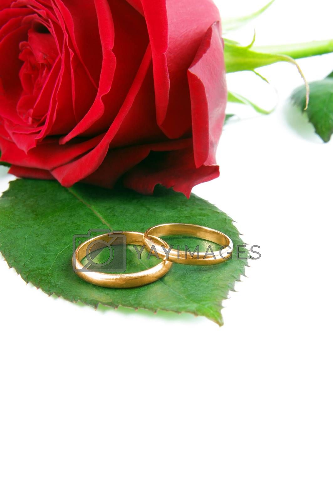 wedding rings with rose.copy space
