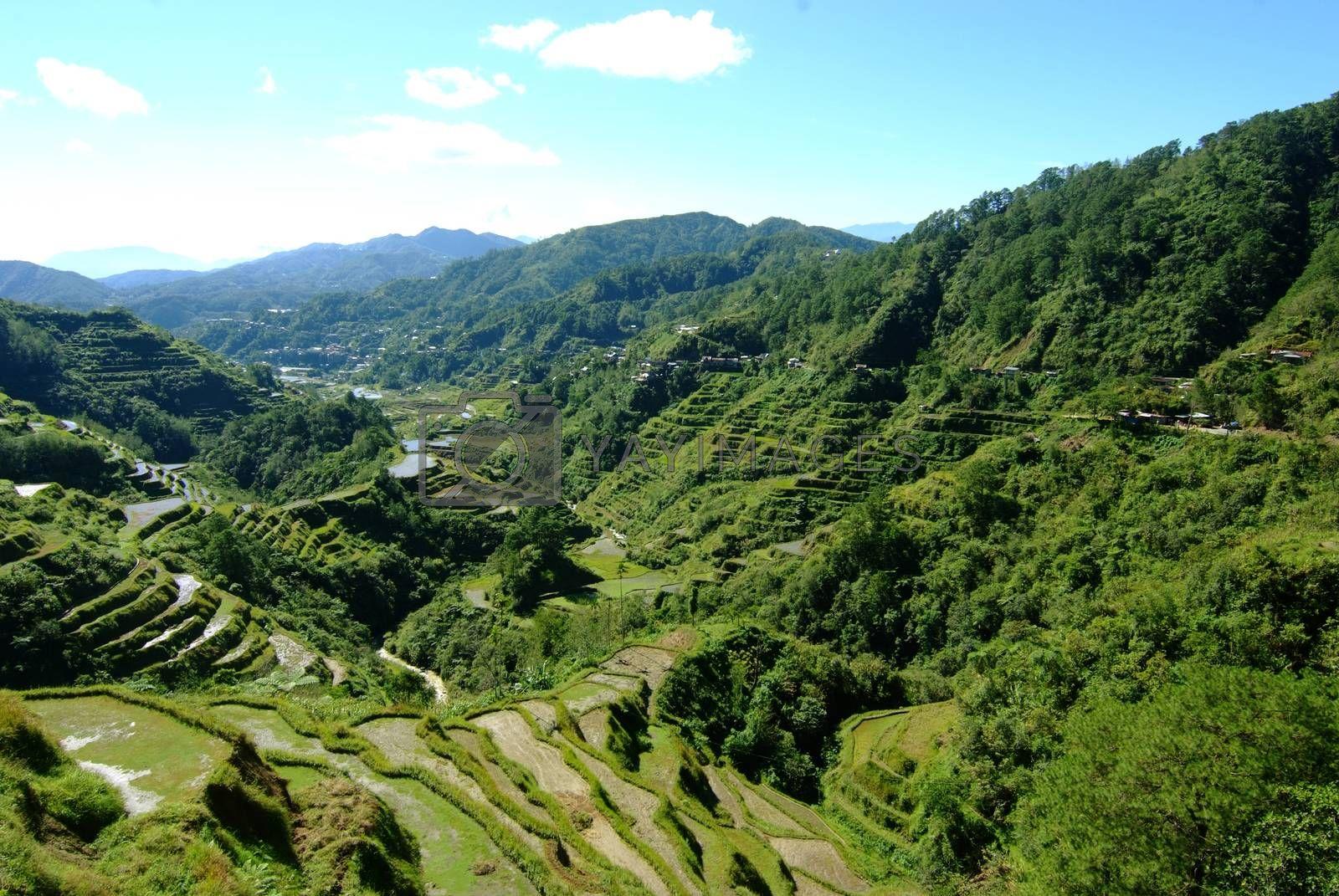 Rice terraces in the Philippines. The village is in a valley among the rice terraces. Rice cultivation in the North of the Philippines Batad Banaue.