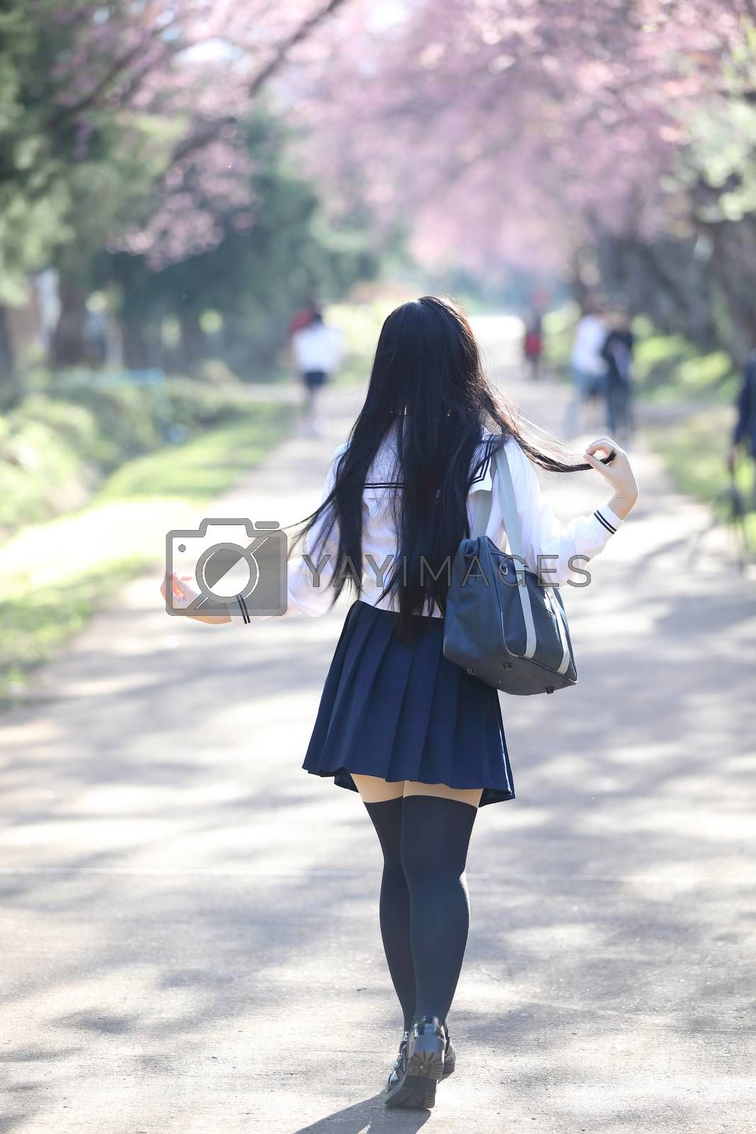 Japanese school girl dress walking with sakura flower nature walkway