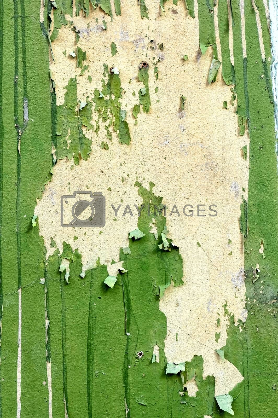 Green Peeling Painting on Concrete Wall.