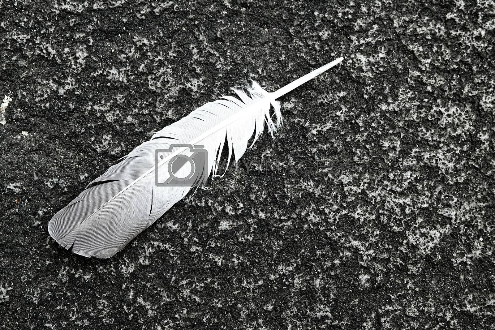 Feather on Concrete Ground.