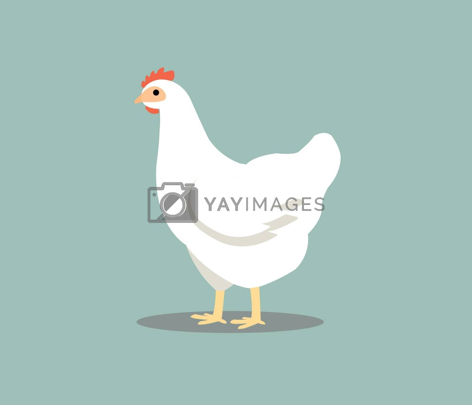 White hen isolated on gray background. Chicken vector illustration in color.