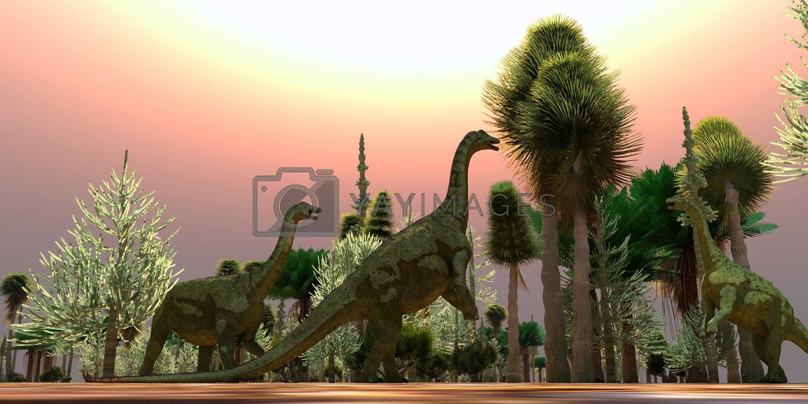 A Saltasaurus dinosaur herd munches on Cycad trees during the Cretaceous Period of Argentina.