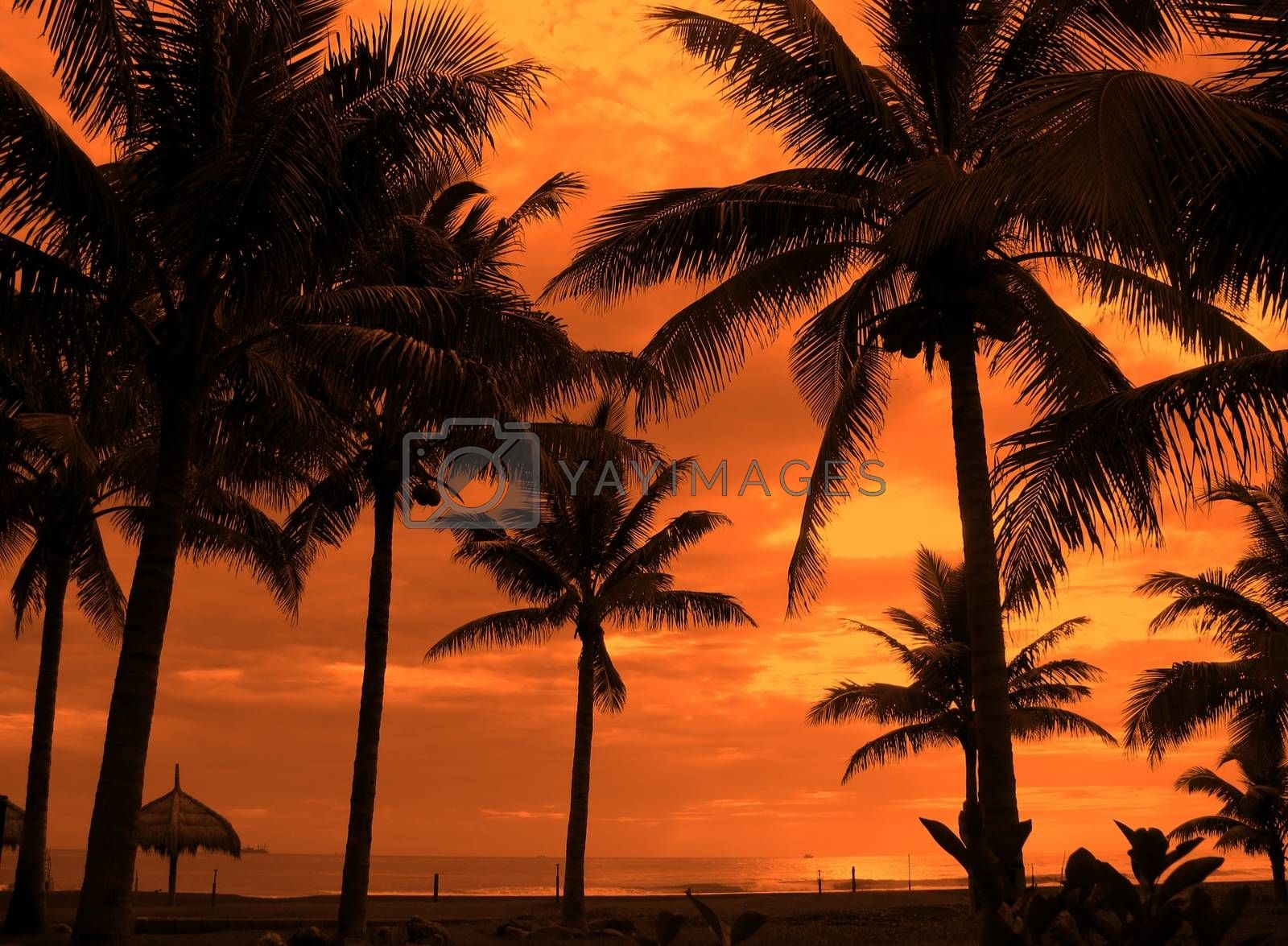 -- palm trees and ocean shore on an afternoon
