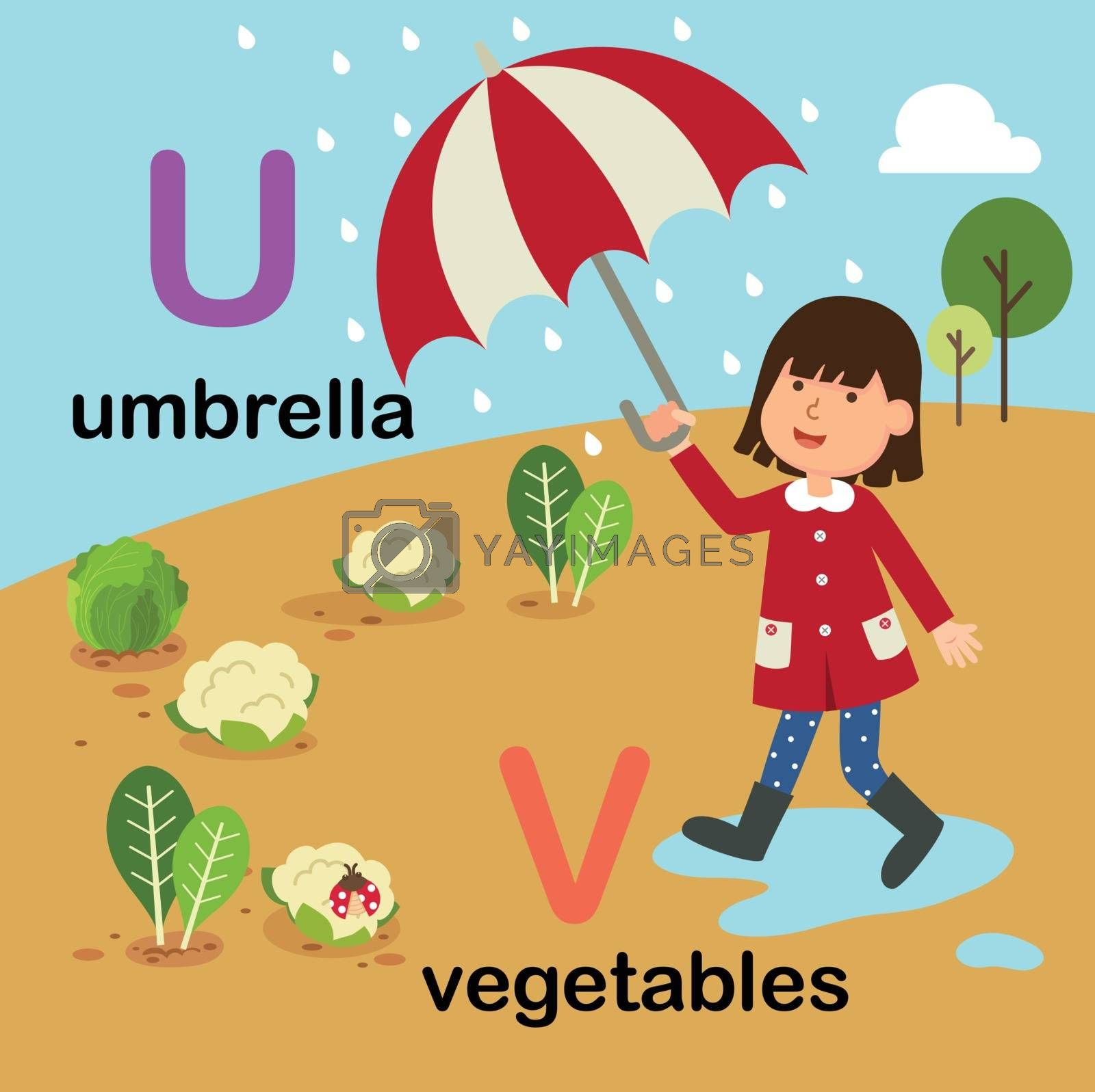 Alphabet Letter U-umbrella,V-vegetables,vector illustration