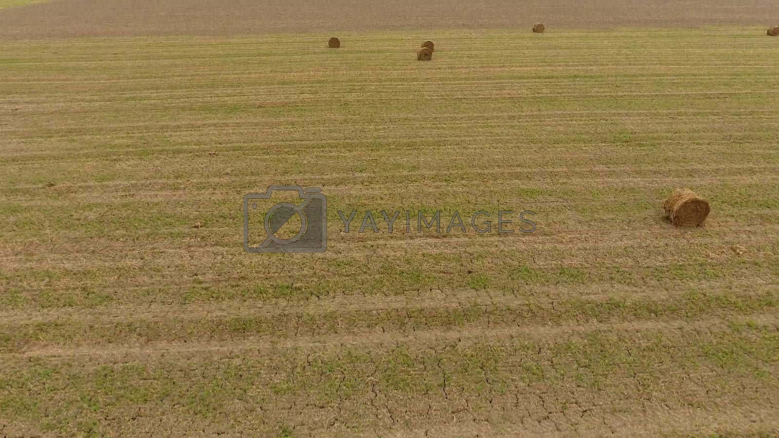 Bales of hay in the field. Harvesting hay for livestock feed. Landscape field with hay.
