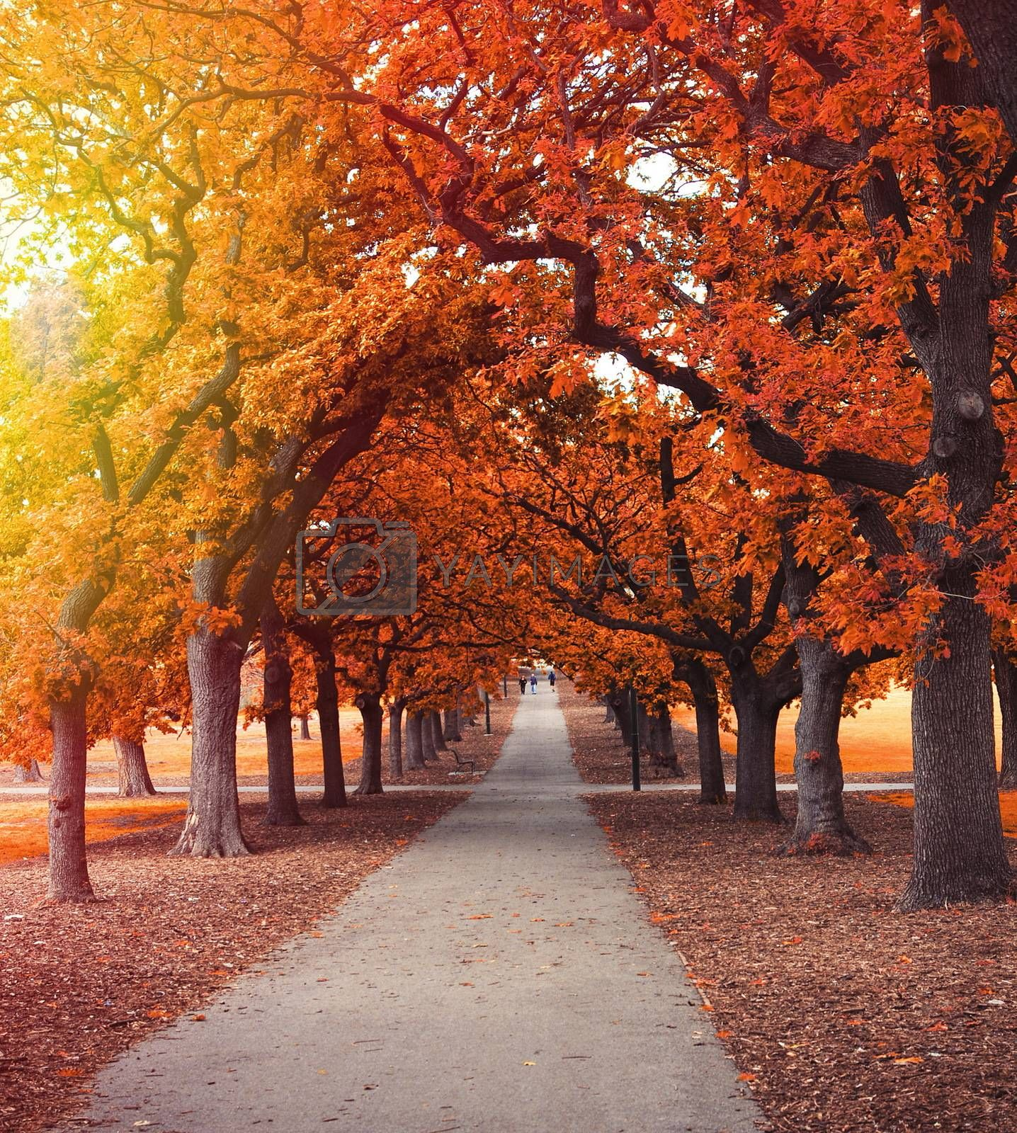 autumn park alley with sunlight