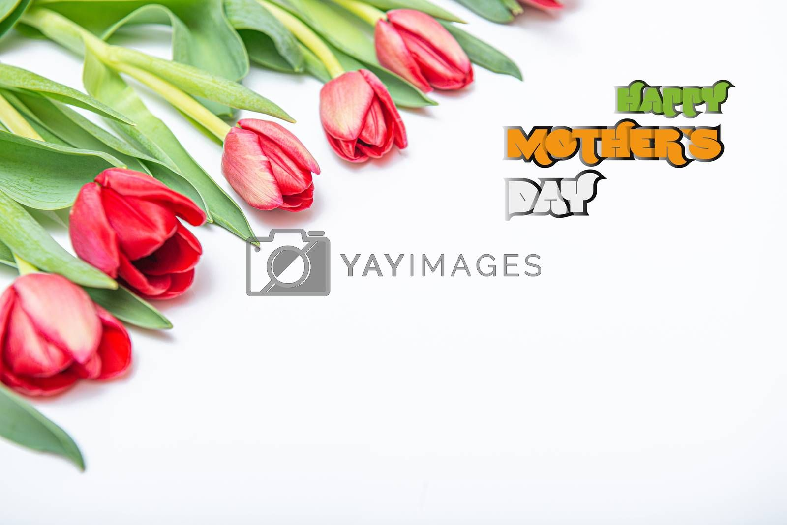 Flat lay top view of red tulips isolated on white for one side with empty place for text