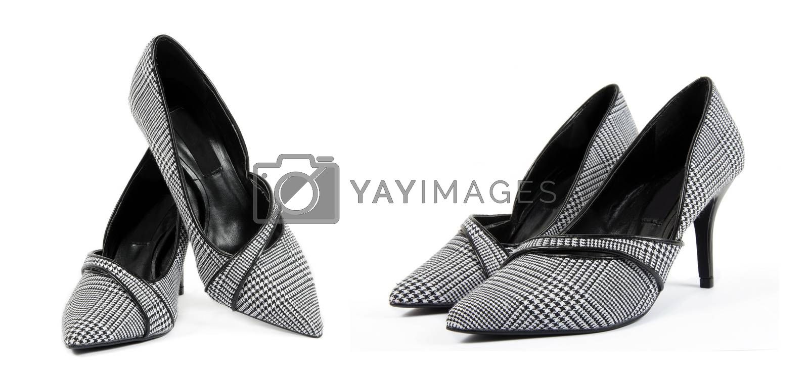 Elegant female shoes on the white