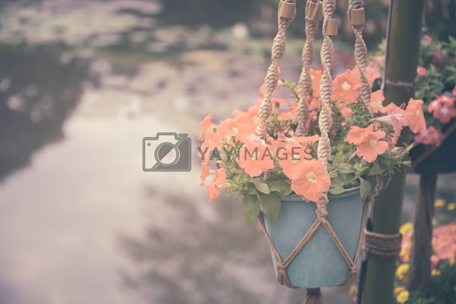 Petunias in flowerpot hanging over pond background