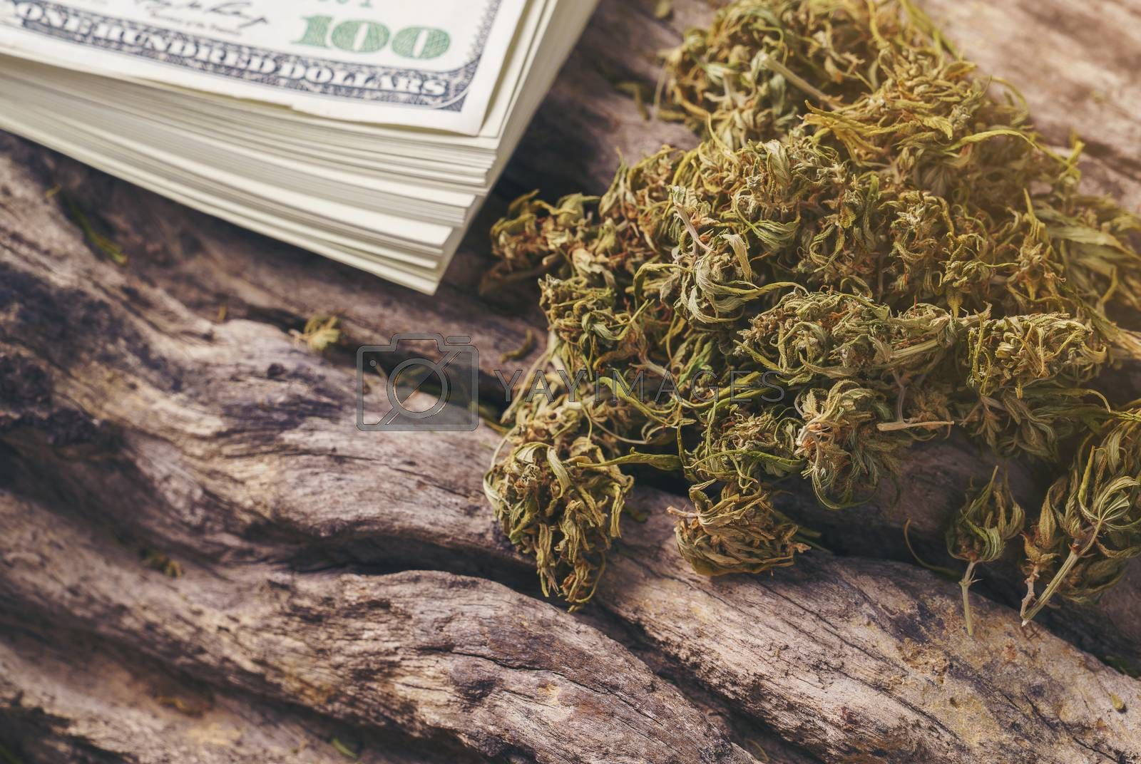 dried cannabis medical marijuana with dollar banknote