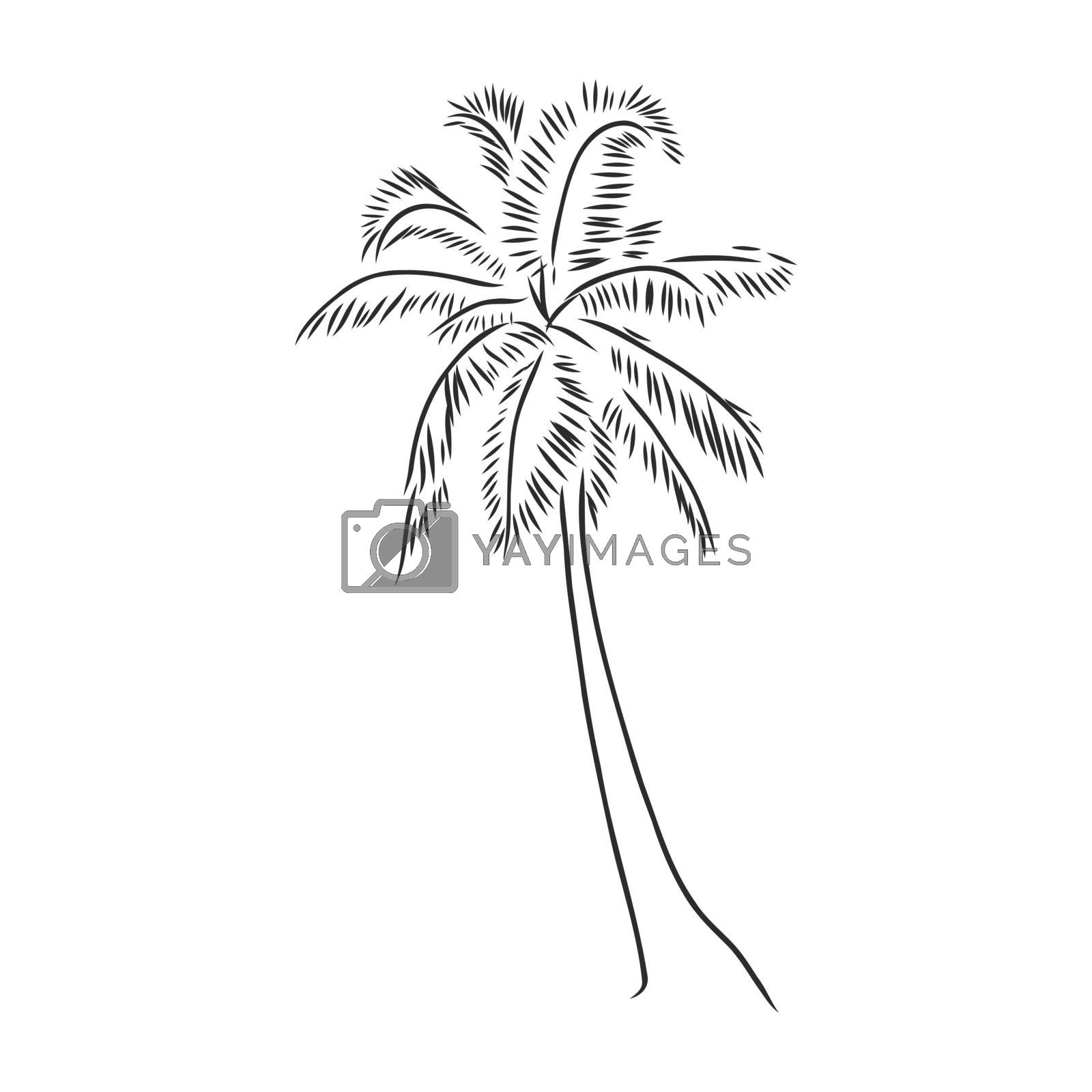 Hand drawn palm tree