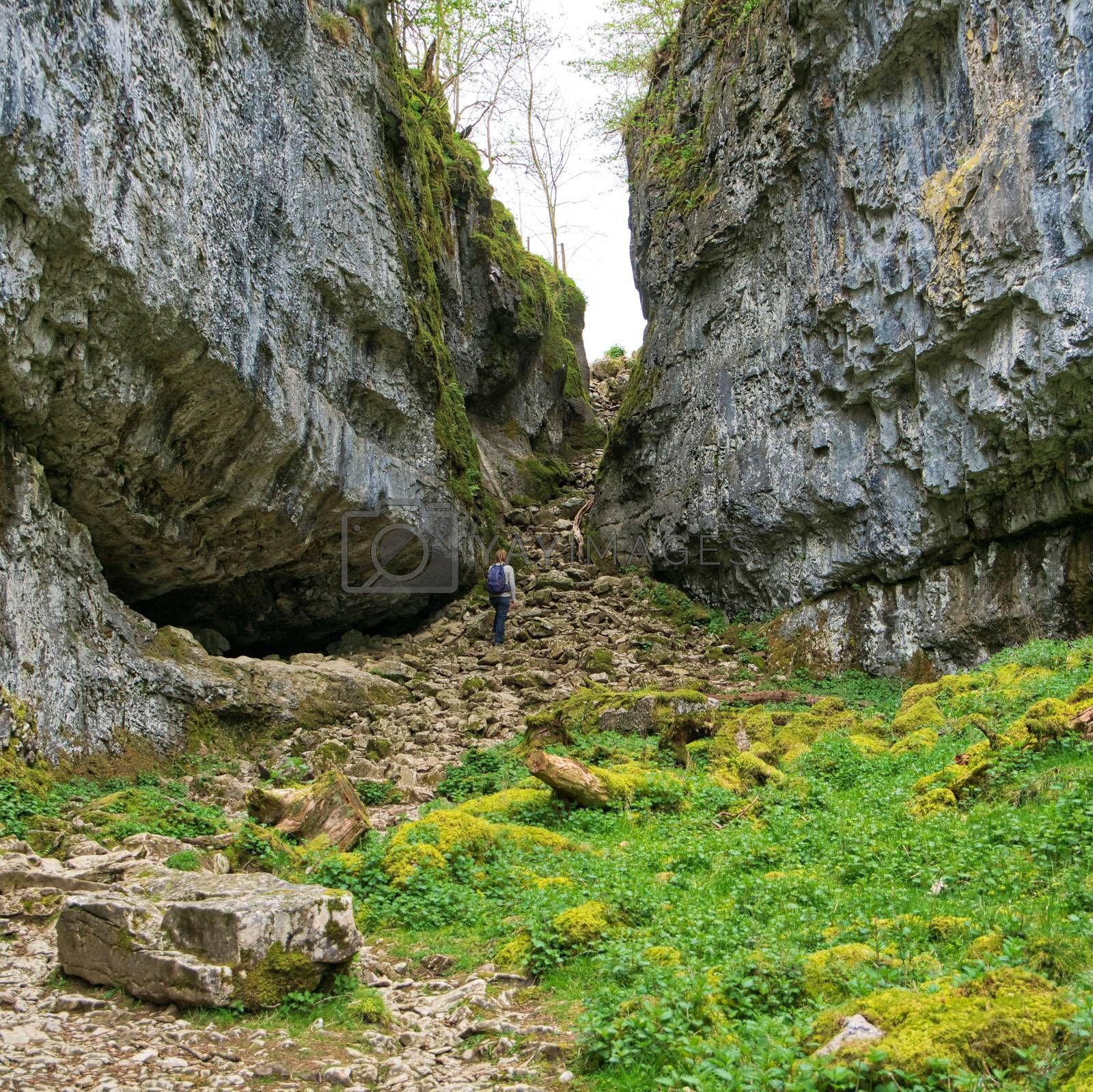 A walker looks up at Trow Gill, a meltwater gorge near Clapham in the Yorkshire Dales, UK