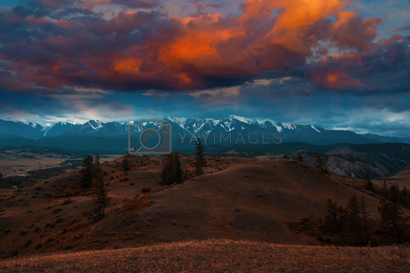 Royalty free image of Maral on mountains background by rusak