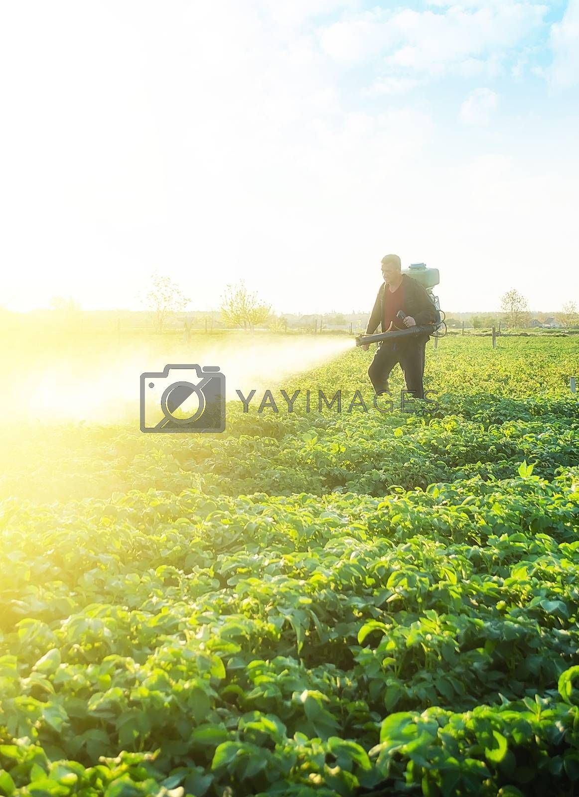 Farmer spray crops with pesticides. The use of chemicals in agriculture. Agriculture and agribusiness, agricultural industry. Protecting against insect plants and fungal infections. Small farm
