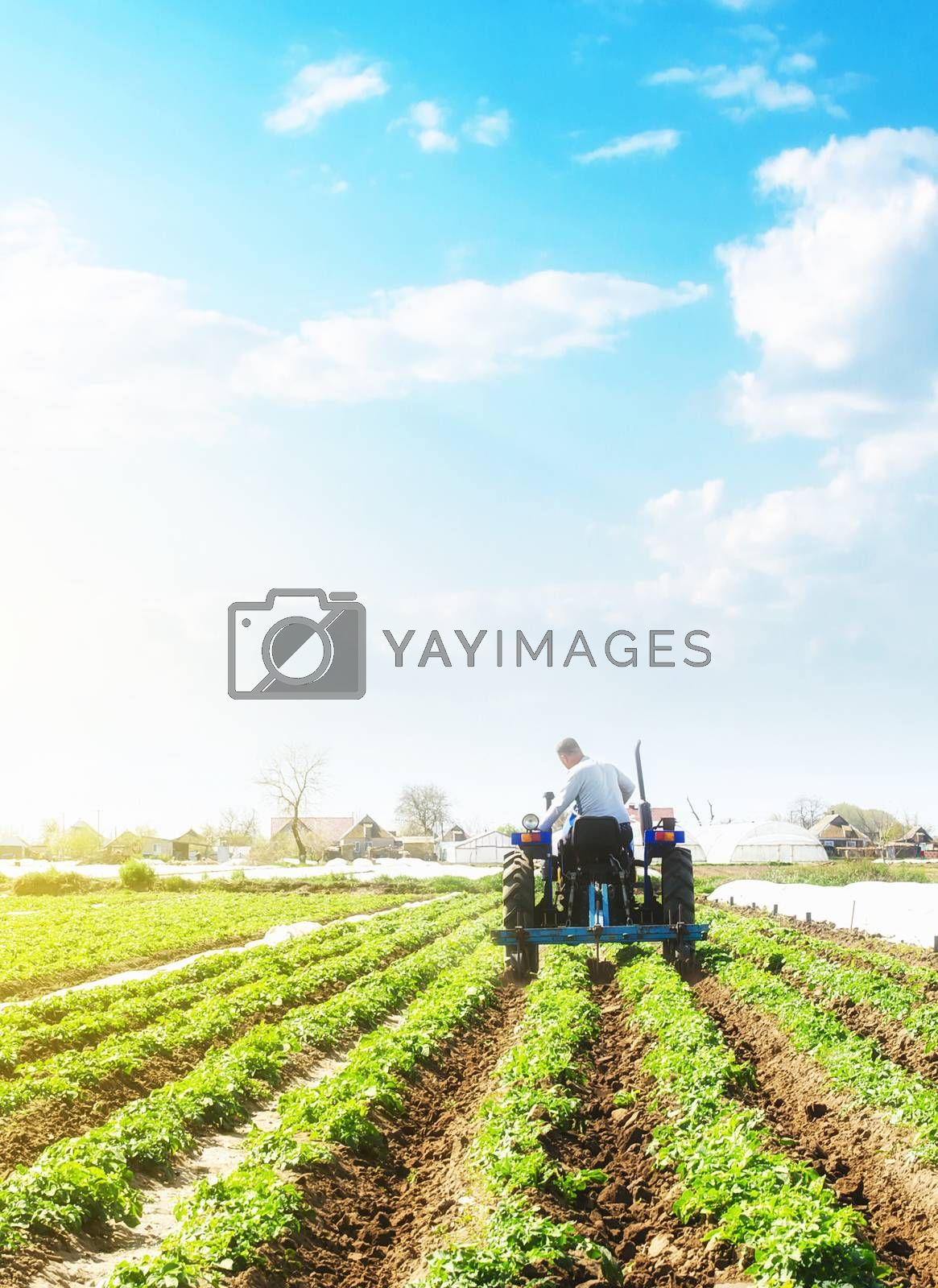 A farmer on a tractor loosens the soil and removes weeds on a potato plantation. Farming agricultural industry. Processing and cultivation of soil. The process of growing food on a farm. by iLixe48