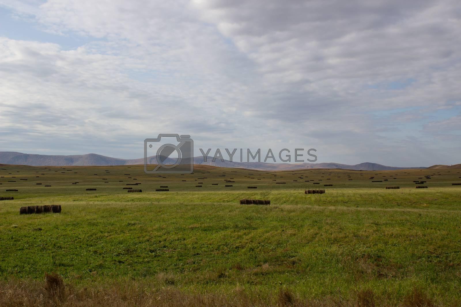 A spacious green field where cows graze.