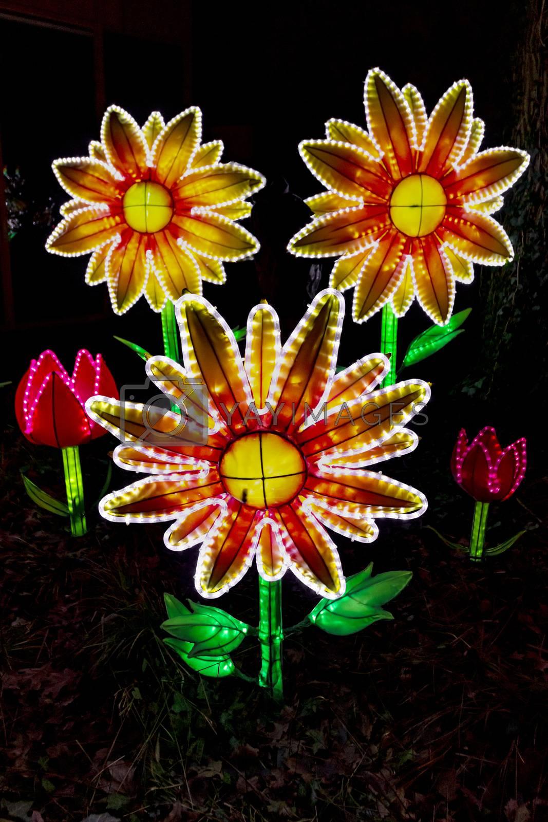 Illuminated flowers and tulips in the dark night