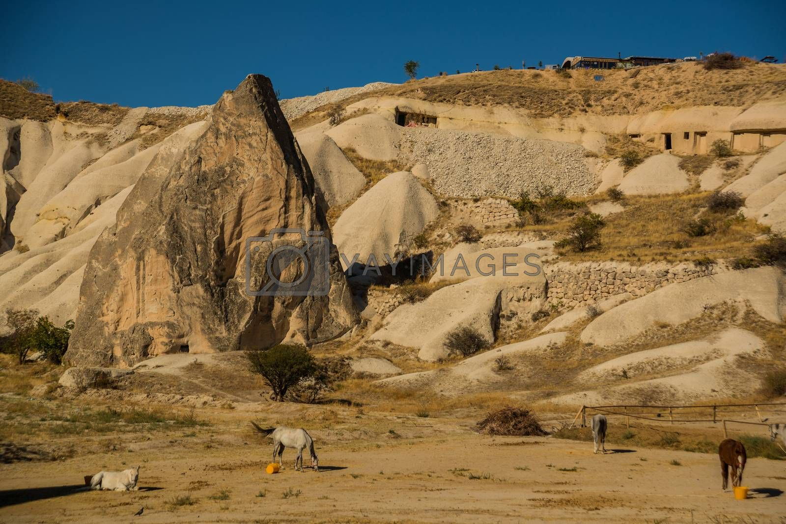 Cappadocia, Turkey: Horses near the mountains in Sunny summer weather. Beautiful landscape in summer with hills.