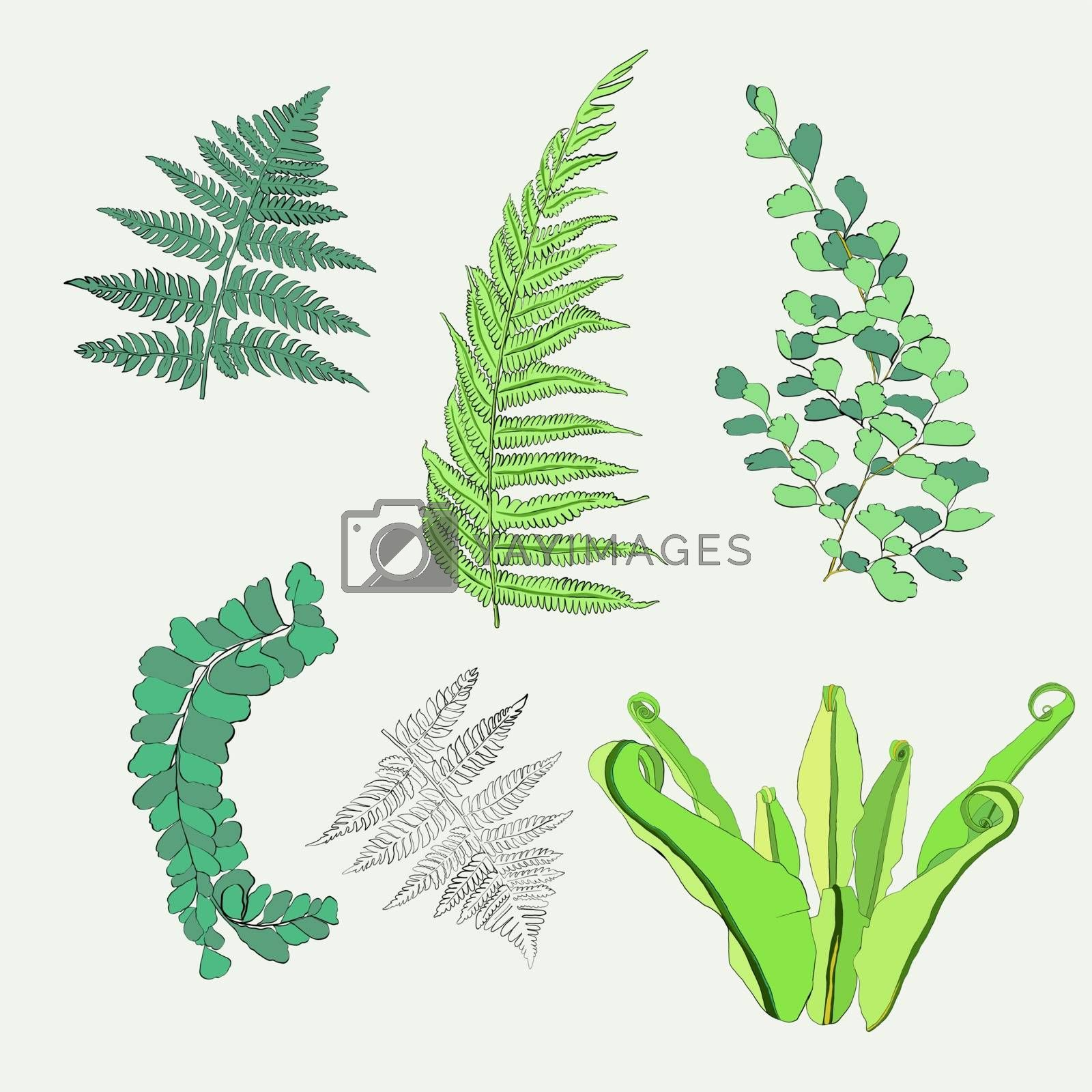 Botanical  collection of fern leaves. by Margolana