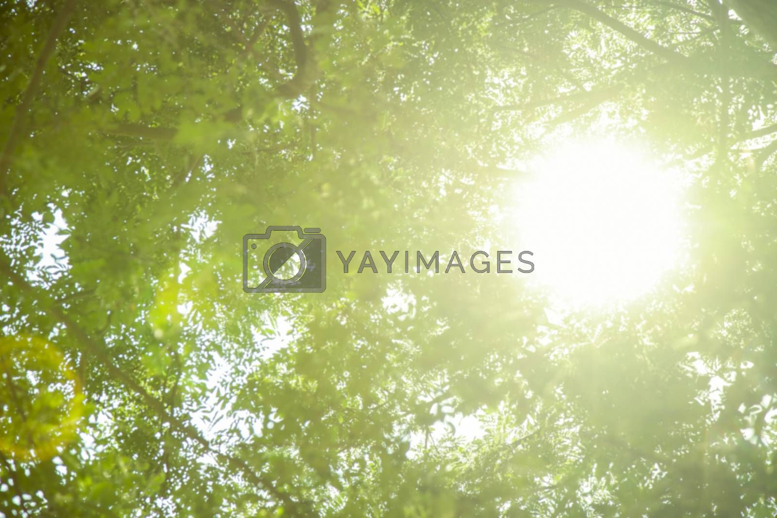 Abstract blur of green tree with light from the sun
