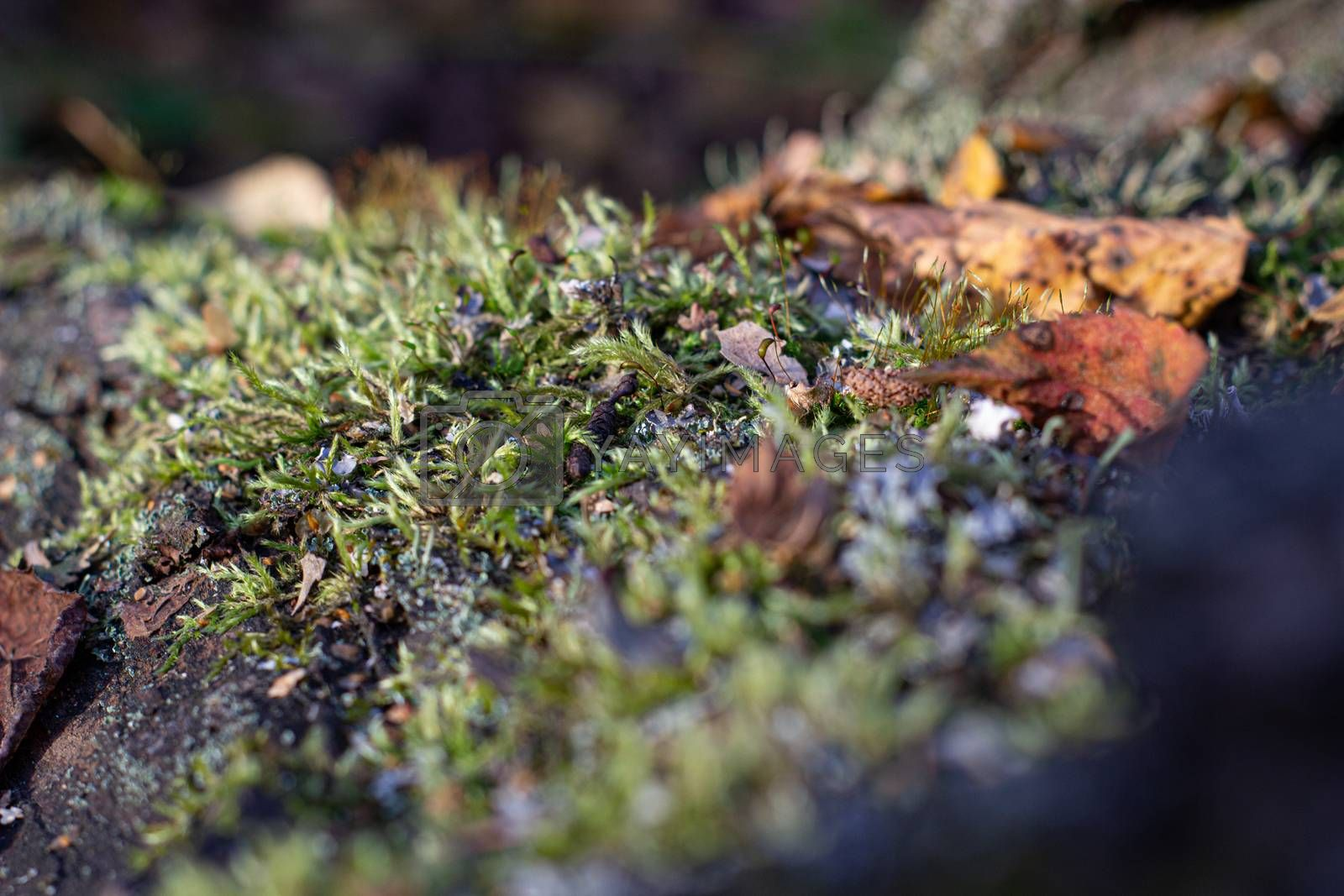 Moss on the tree. Mushroom picking. A walk in the woods