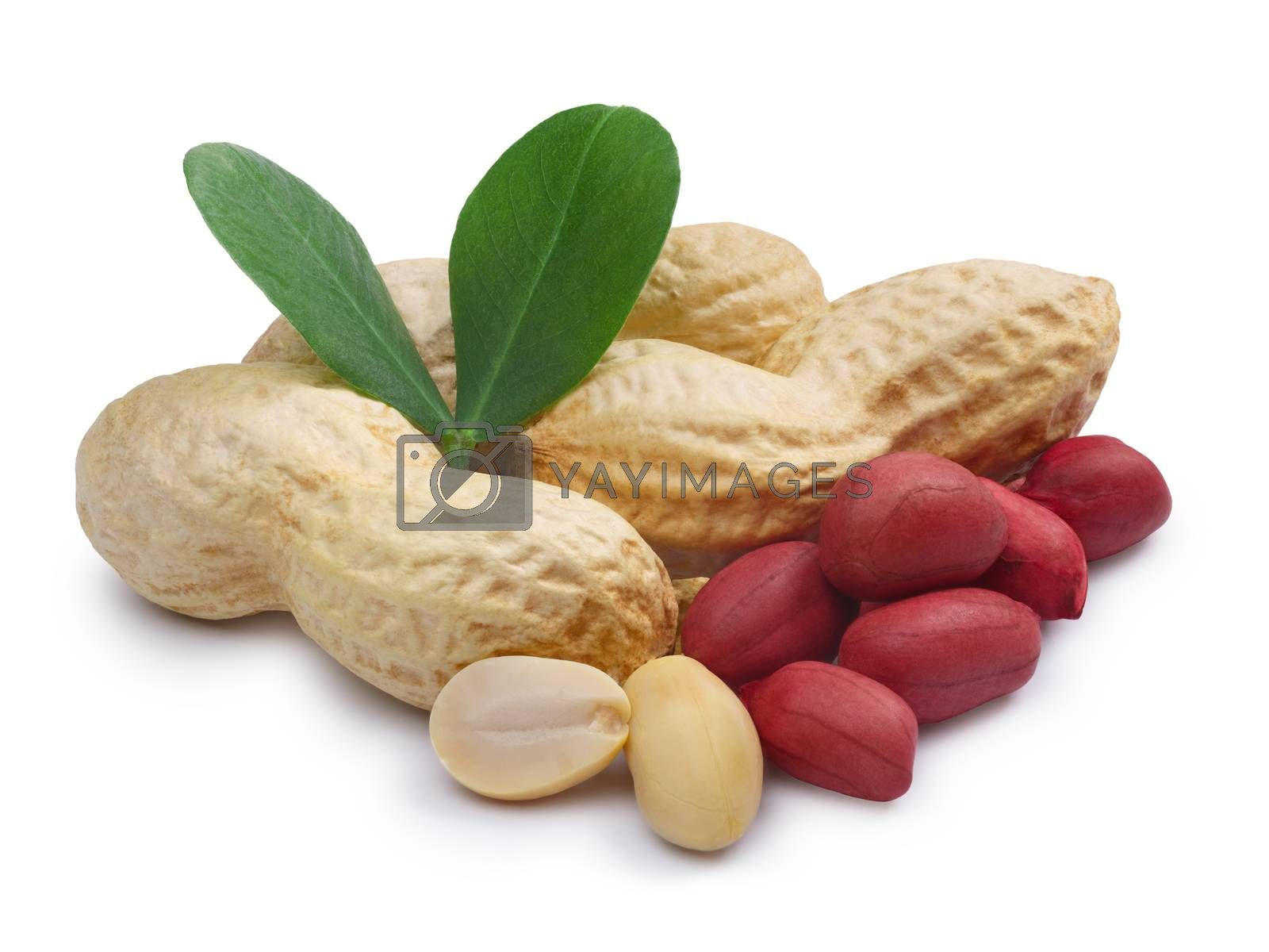Heap of peanuts in shell, whole shelled, blanched, whole and split, roasted, with leaves. Clipping paths, infinite DOF